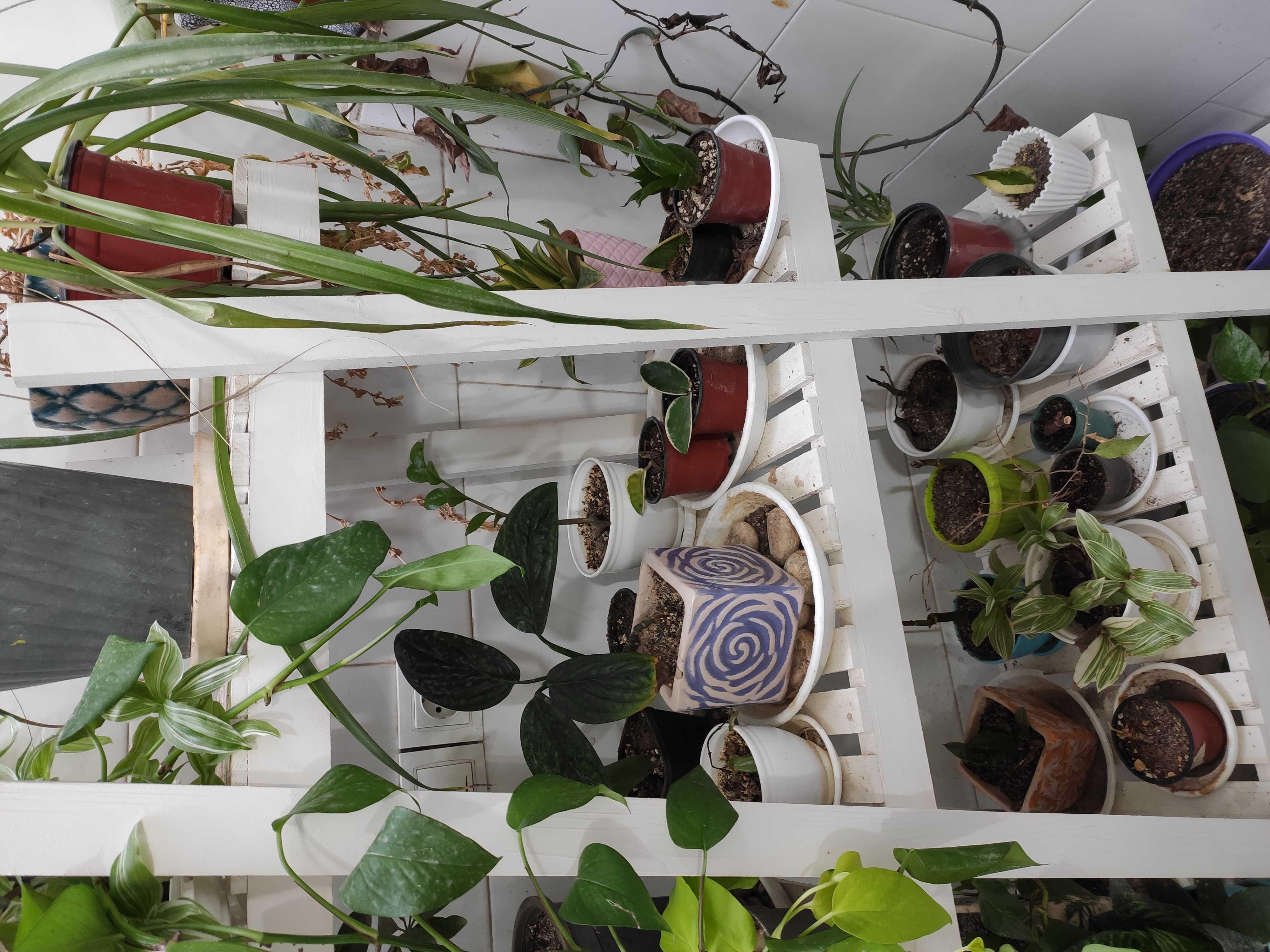 ابزار باغبانی